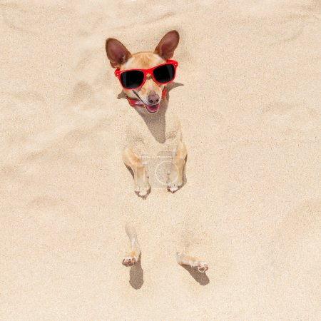 dog buried in sand