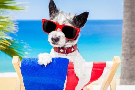 Dog summer holiday vacation