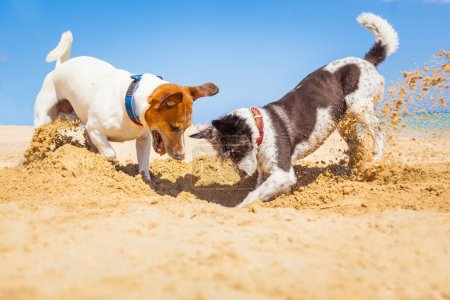 dogs digging a hole