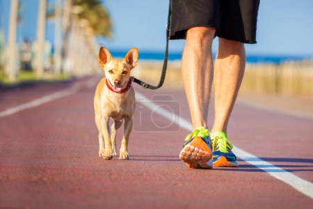 Dog and owner walking