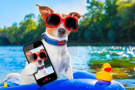Photo pour Jack Russell chien assis sur un matelas gonflable dans l'eau par la mer, la rivière ou le lac en vacances d'été, en prenant un selfie - image libre de droit