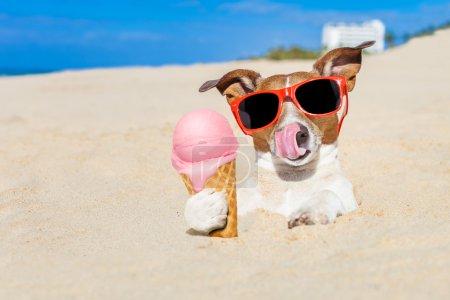 Photo pour Jack Russell chien lécher la crème glacée avec la langue enfouie dans le sable à la plage de l'océan pendant les vacances d'été, portant des lunettes de soleil drôles rouges - image libre de droit