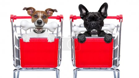 Photo for Couple of two  dogs together  inside a shopping cart trolley , behind  a blank  empty banner or placard, with a bone in mouth , isolated on white background - Royalty Free Image