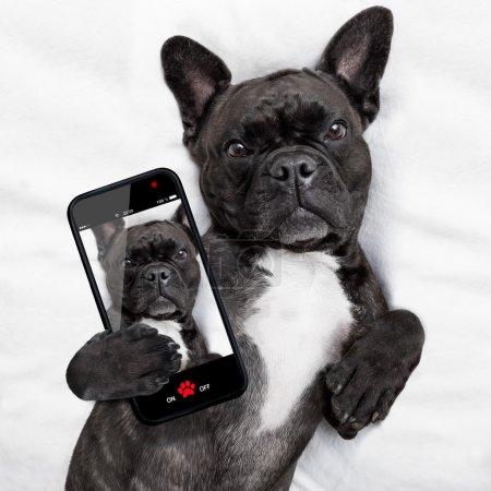 dog selfie in bed