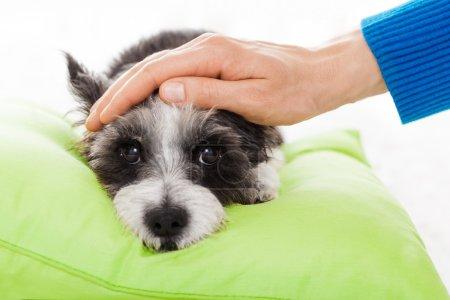 Photo pour Propriétaire caressant son chien, pendant qu'il dort ou se repose, se sentant malade et malade de température et de fièvre, les yeux fermés - image libre de droit