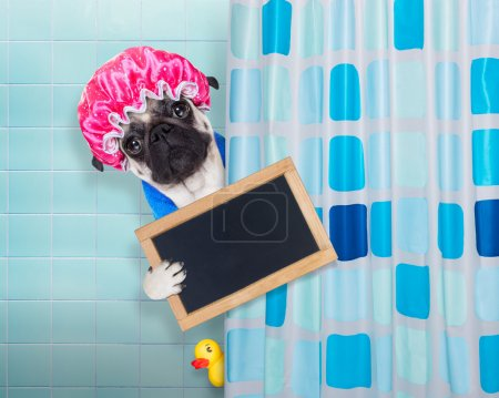 dog in shower