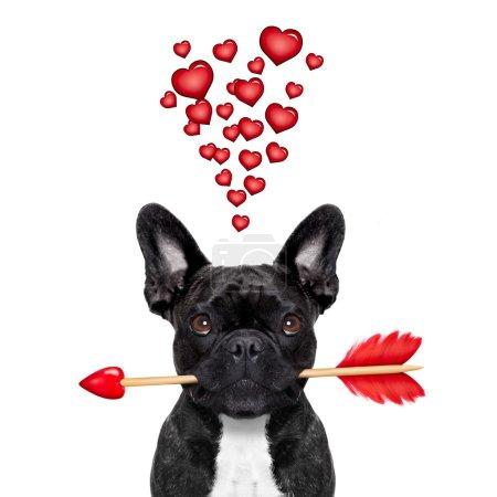 valentines dog in love