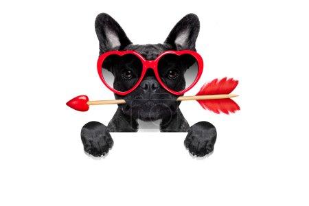 Photo pour Chien bouledogue français Saint-Valentin amoureux tenant une flèche d'amours avec la bouche, derrière le tableau vide vide ou une bannière, lunettes de soleil, isolé sur fond blanc - image libre de droit
