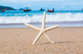 Starfish on the Beach for background