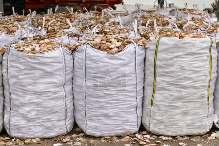 Bags with empty scallop shell for processing...