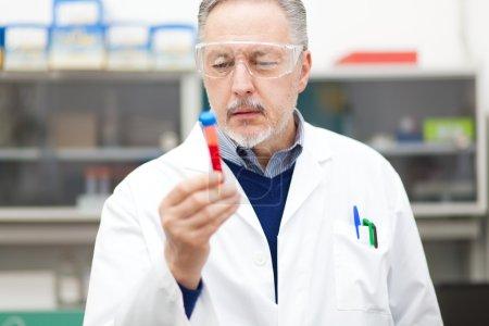 Scientist at work in laboratory