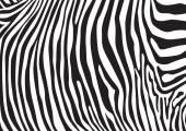 Zebra stripes pattern illustration background