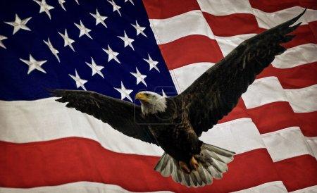 Photo pour Photo composite d'un Pygargue à tête blanche volant avec un drapeau des États-Unis d'Amérique en arrière-plan. Compte tenu d'une subtile superposition de grunge pour un bel effet texturé. Belle image patriotique pour la fête de l'indépendance, le jour du Souvenir, la fête des anciens combattants et la fête des présidents . - image libre de droit