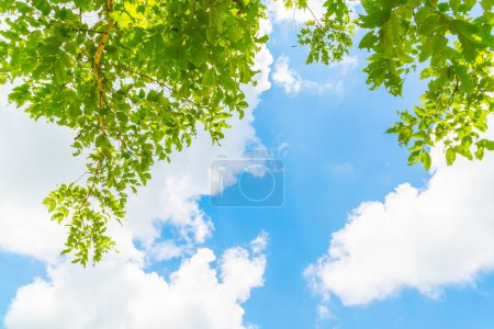Beautiful trees branch on blue sky .