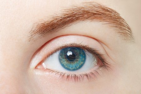 Photo pour Homme, bleu oeil sain macro, concept de vision - image libre de droit
