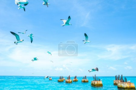 Gulls circling over the sea in search of food on a...