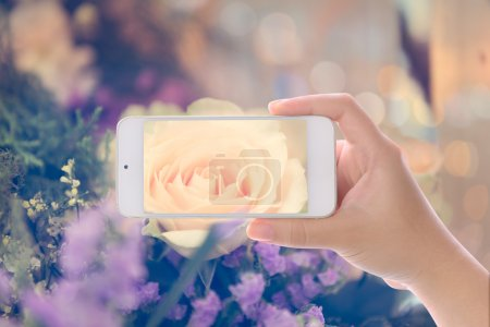 Hand using smartphone photographed vintage rose flower bouquet s
