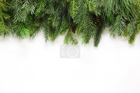 Photo for Christmas tree branches background - Royalty Free Image