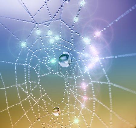 Spiderweb and dewdrops
