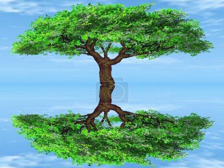 Photo pour Un arbre vert et réflexion sur fond bleu - image libre de droit