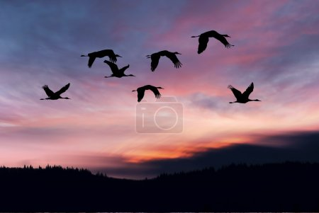Landscape during sunset with flying birds