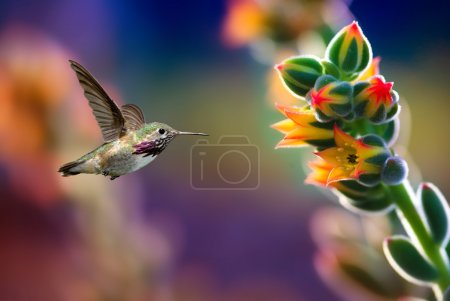 Photo for Hummingbird in motion approaching beautiful flower - Royalty Free Image