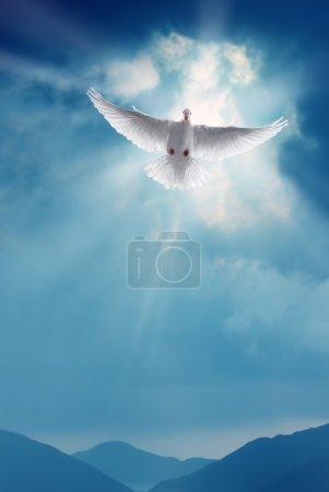 Photo pour Blanche colombe dans un ciel bleu, symbole de la foi - image libre de droit