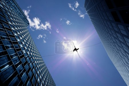 Photo for Highline walker in blue sky between two buildings concept of risk taking and challenge - Royalty Free Image