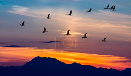 Migratory Birds Flying at Sunset