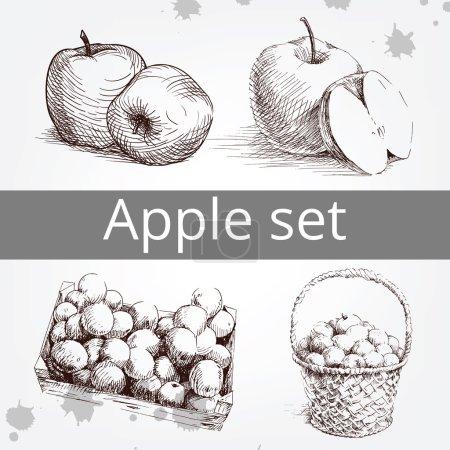 Fresh apple set, hand drawing