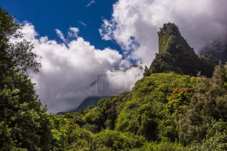Beautiful Hawaiian Rainforest