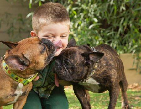 Dogs Licking a Little Boy