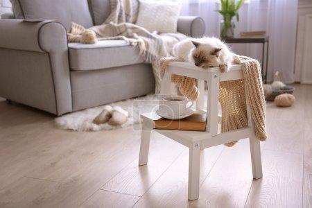 Photo pour Chat à pointe de couleur avec écharpe couchée sur une chaise blanche dans le salon - image libre de droit