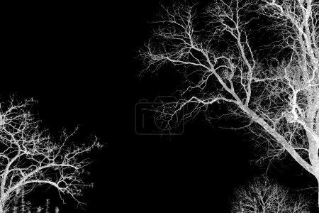 Photo pour Silhouette de branches d'arbres secs, isolées sur noir - image libre de droit
