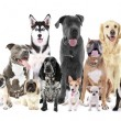 Group of different breed dogs sitting in front, is...