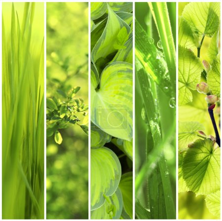 nature green backgrounds