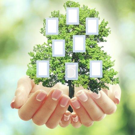 Photo pour Mains tenant arbre généalogique familial avec cadres vierges, sur fond de nature - image libre de droit