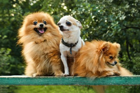 Cute dogs in park