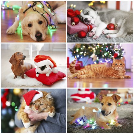 Photo for Funny cats and dogs with santa hats - Royalty Free Image