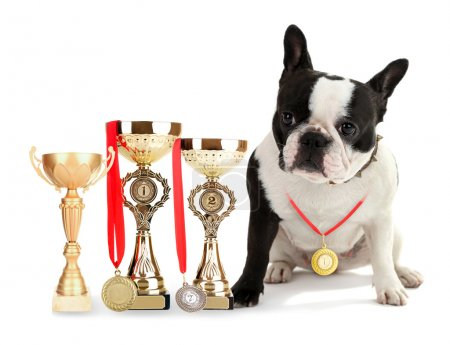 French bulldog with trophy cups and medals