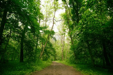 Photo for Path in green forest on summer day - Royalty Free Image