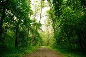 """Постер, картина, фотообои """"Путь в зеленом лесу"""""""