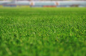 Zelené pole pro sport