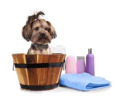 little dog in wooden bucket