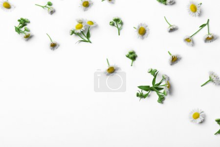 Chamomile flowers scattered