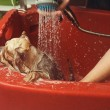 Постер, плакат: Hairdresser washing cute dog