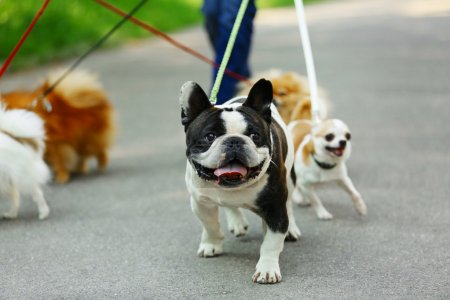Woman walking dogs