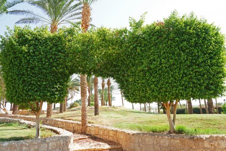 Topiary trees in the garden