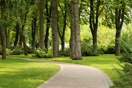 Alley in beautiful green park