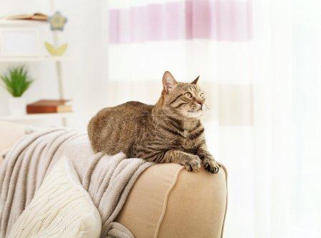 Grey tabby cat lying on sofa backrest...